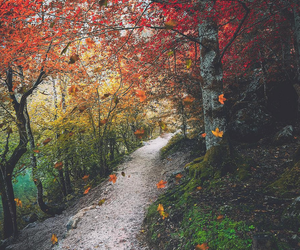 autumn, colours, and travel image