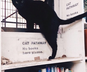 books, library, and cat image