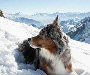 dog, snow, and travel image