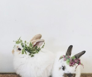 animals, tumblr, and flower crowns image