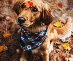 animal, dog, and fall image