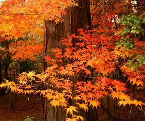 autumn, forest, and seasons image