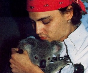 johnny depp, animal, and Koala image
