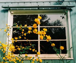 flowers, yellow, and window image
