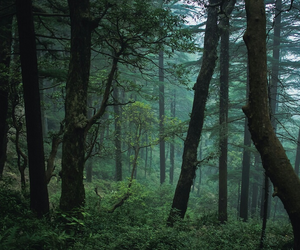 forest, lost, and trees image