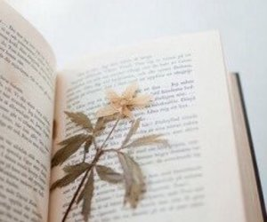 book, fleur, and diary image