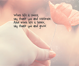 flower, life, and cute image