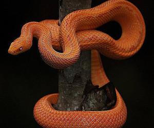 snake and animal image