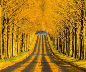 nature, tree, and yellow image