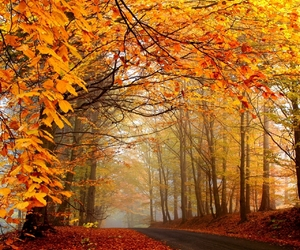 autumn, nice, and leaves image