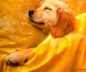 dog, puppy, and yellow image