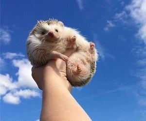 animal, clouds, and hedgehog image