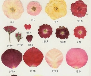 flowers, petals, and aesthetic image