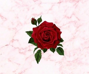 wallpaper, red, and rose image