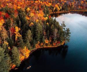 amazing, freedom, and nature image