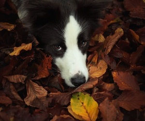 automn, dog, and fall image