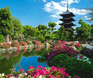 japan, flowers, and garden image