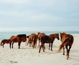 horse, beach, and sea image