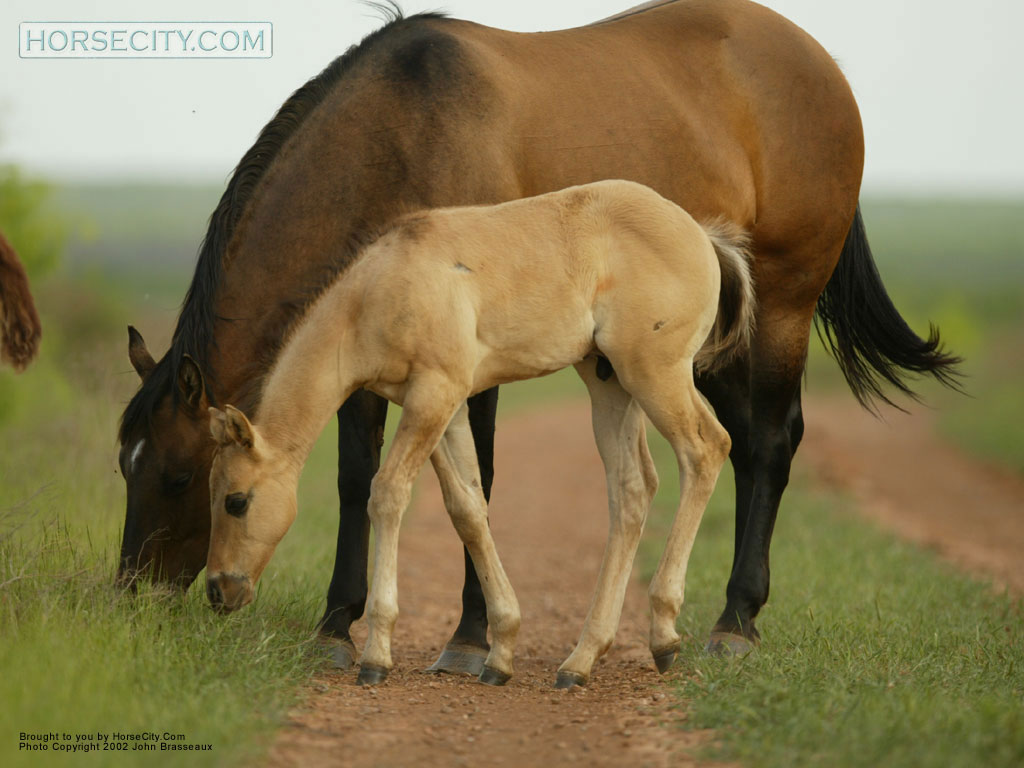 Free Mare And Foal Wallpaper Download The Free Mare And Foal