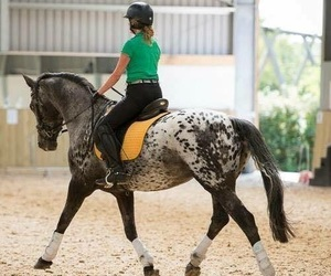 equestrian, ride, and horse image