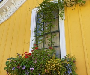 flowerbox, house, and yellow image