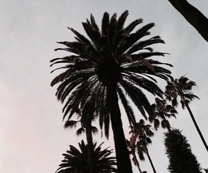 theme, palm trees, and summer image