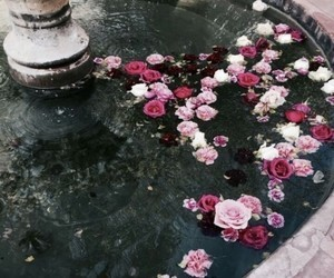 flowers, rose, and fountain image