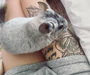 animals, pets, and Tattoos image