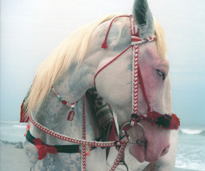horse and red image