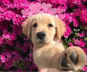 beautiful, wallpapers, and dog image