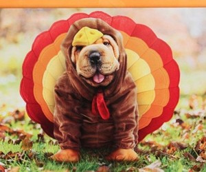 cute, animals, and autumn image