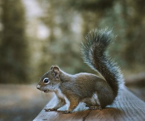 animal, automn, and cute image