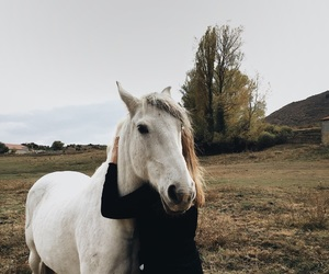 goals, horse, and tumblr image