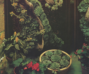 plants, terrarium, and vintage image