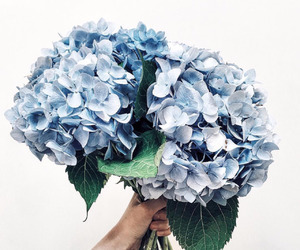 blue, cute, and flowers image