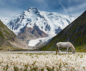 horse, mountains, and landscape image
