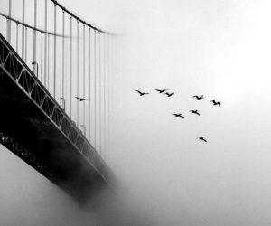 birds, black and white, and bridge image