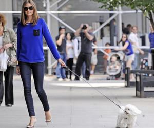 olivia palermo, fashion, and dog image
