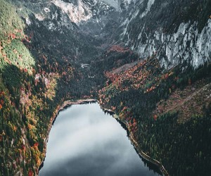 austria, run away, and forest image