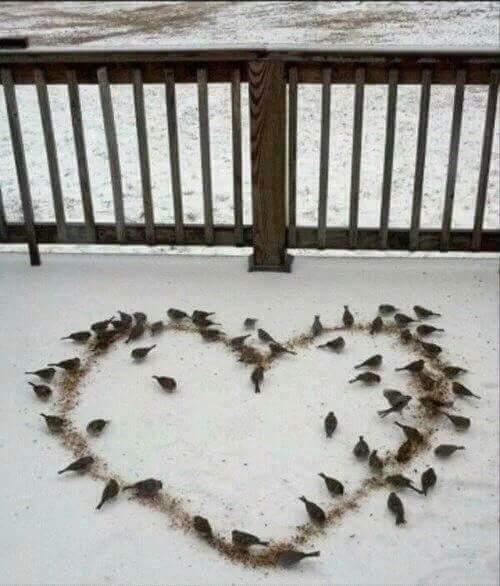 bird and heart image