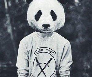 panda, black and white, and guy image