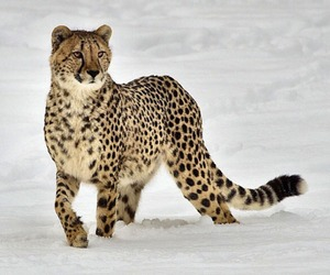 animals, fashion, and nature image