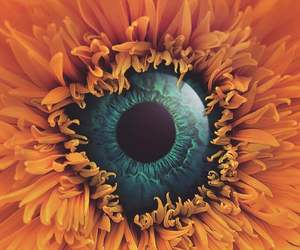 abstract, eye, and flower image