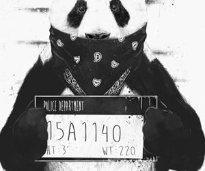 black, panda, and wallpapers image
