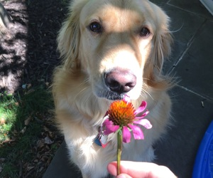 dog, photography, and flower image