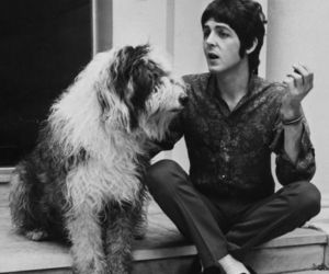 Paul McCartney, Martha, and the beatles image