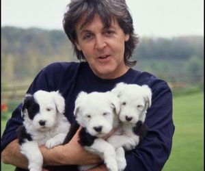 Paul McCartney, puppies, and the beatles image