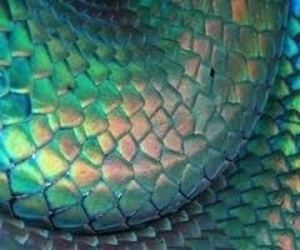 snake, green, and grunge image