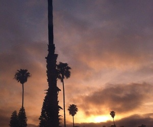 my, palms, and sky image