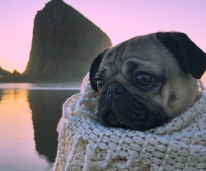 blanket, cozy, and dog image